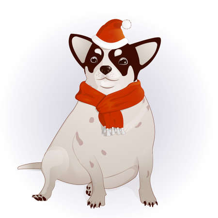 chihuahua in a New Year s cap