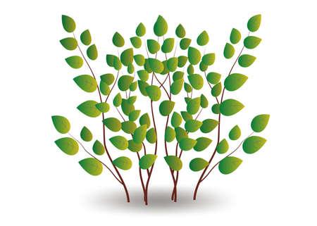 shrubs vector