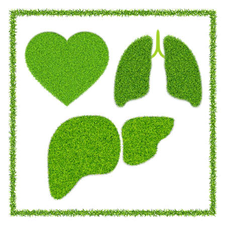 Heart, lungs and liver. Human organs with green grass texture. With grass frame isolated on white background. Realistic. Vector. Ilustracja