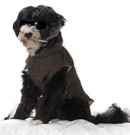 a black bad smoking dog Stock Photo