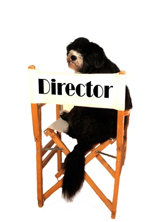 a black director filmaker funny dog photo