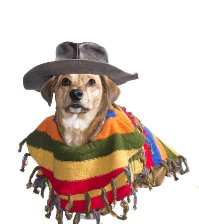 perros vestidos: perro con sombrero y poncho mexicano