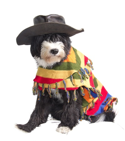 dog with Mexican sombrero and poncho photo