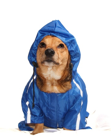 the blue rain dog Stock Photo