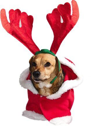 a sweet reindeer of Santa Claus Stock Photo