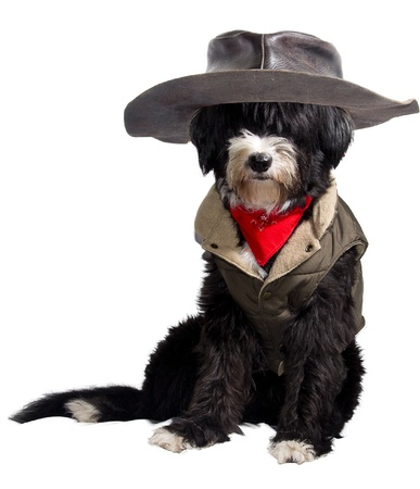 texan: dog dressed as a true Texan cowboy