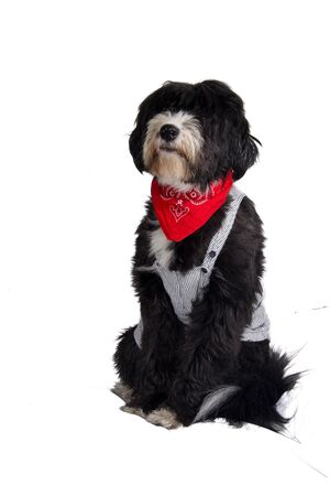 bobtail: a worker who repairs things canine