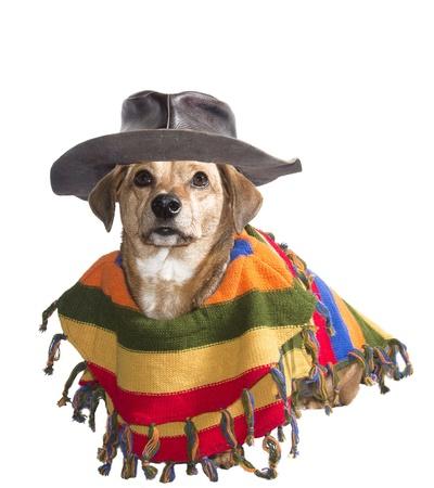 traje mexicano: perro con sombrero y poncho mexicano