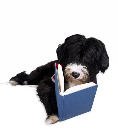 a cute black dog reading a book