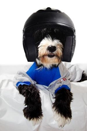 a happy black dog race driver suit and helmet