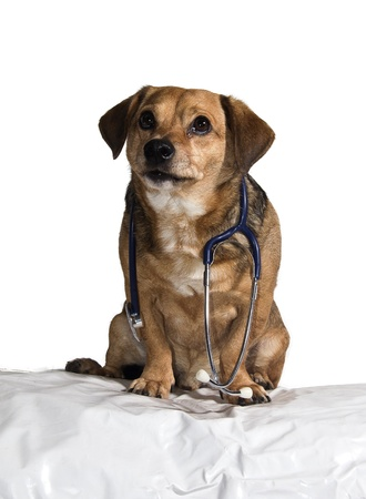 a puppy who has worked for veterinary