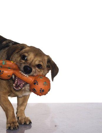 perro furioso: un perro marr�n poco enojado