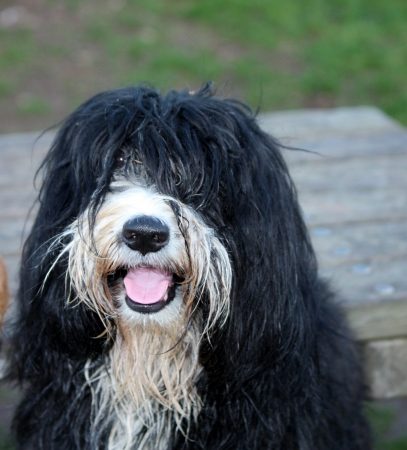 blak and white: funny rasta dog in the park