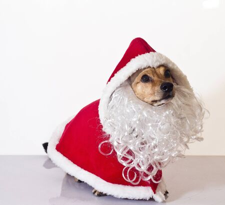 a sweet assistant of Santa Claus