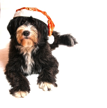 a sweet assistant of Santa Claus photo