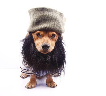 a little dog with the beard black