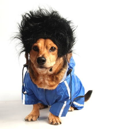 a dog have long black hair and waterproof Stock Photo