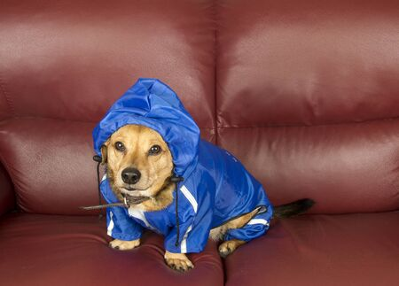 the blue rain dog Stock Photo - 17590527