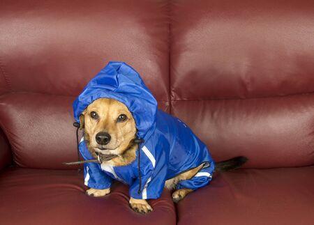 the blue rain dog Stock Photo - 17590527
