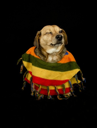 dog with Mexican sombrero and poncho give wink photo