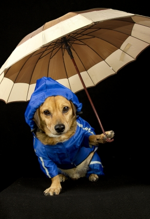 blue rain dog and umbrella Stock Photo - 17700557