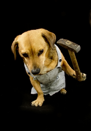 bobtail: a worker dog and hammer