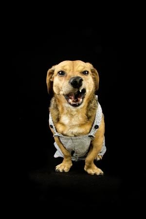 dachshund mad dog