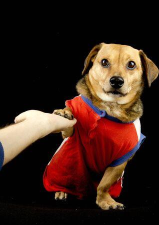 give me five: give me five, dog