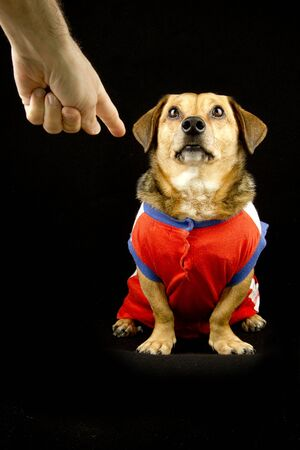 wag: bad dog