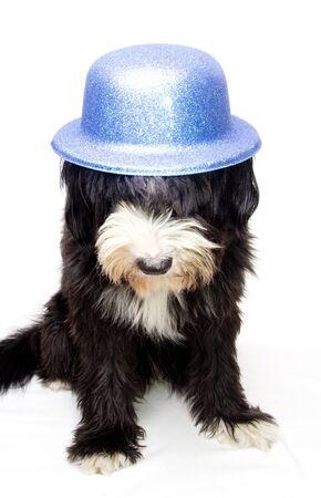 bobtail: happy bobtail and blue hat