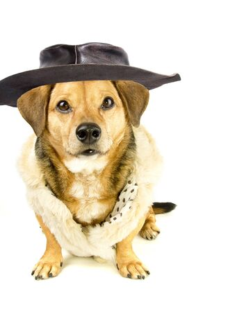 dog with Mexican sombrero and poncho