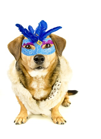 a dog and the mask