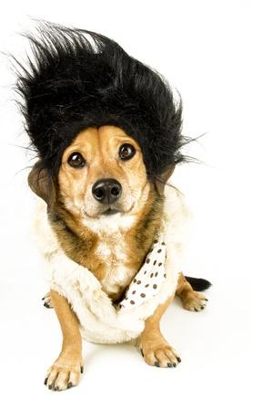 a little hairdresser dachshound photo
