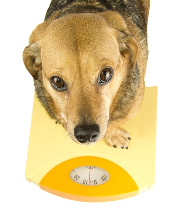 dog weigh