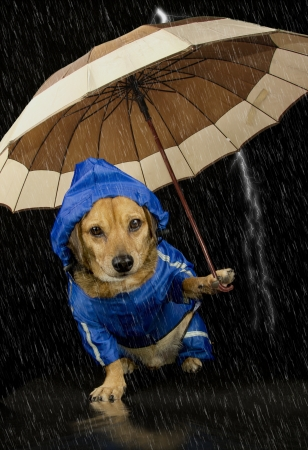 rain cartoon: blue rain dog and umbrella