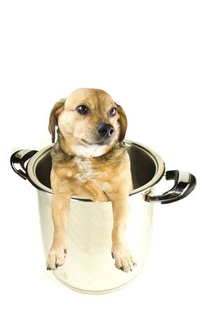 a dog in the pot photo