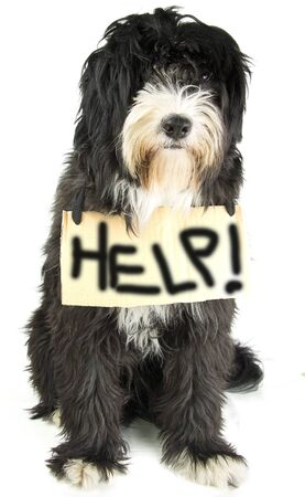 lost love: little dog ask help Stock Photo