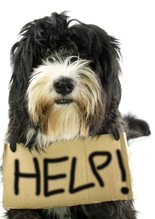 little dog ask help Stock Photo