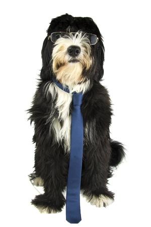 dog and sunglasses photo