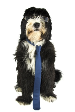dog and sunglasses Stock Photo