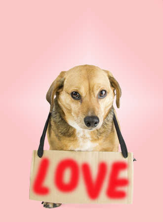 a little dog in the rose background and love sign photo