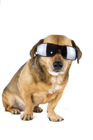 blind dog photo