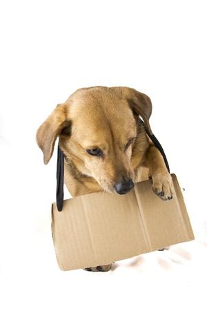 sign dog photo
