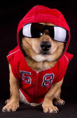 gangsta rapper dog