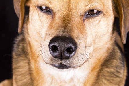 dog nose: naso del cane
