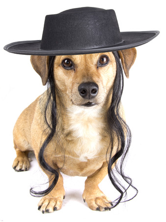 talmud: dog and hat