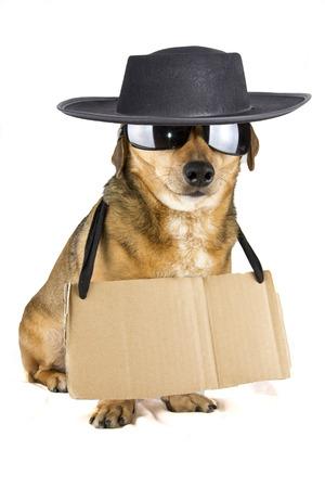 blind hat dog photo