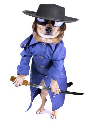 a matrix dog with sunglasses photo