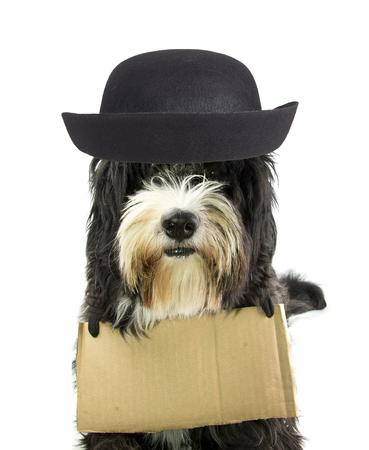 man begging: homeless dog