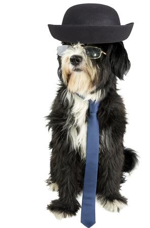nerd dog photo